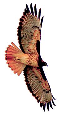 FMR_Birds_1_300w