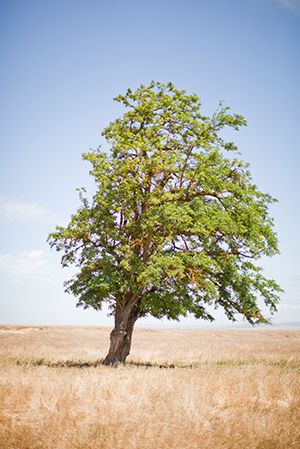 FMR_Tree_1_300w