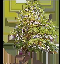 Tree_Graphic_200pxw